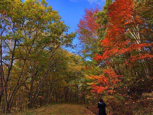 「紅葉の世界」がお出迎え♪見ごろは<~11月中旬!>
