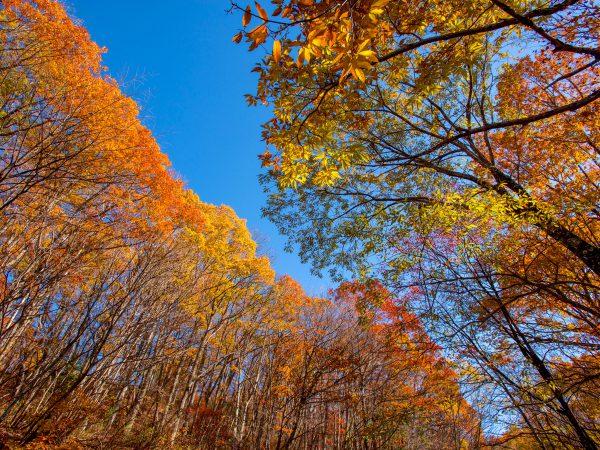 龍リゾート&スパ、秋空と紅葉を楽しめるトレッキングコース